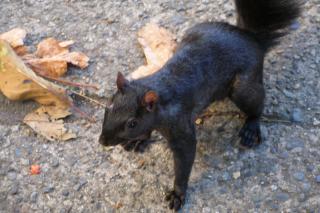 Friendly Squirrel